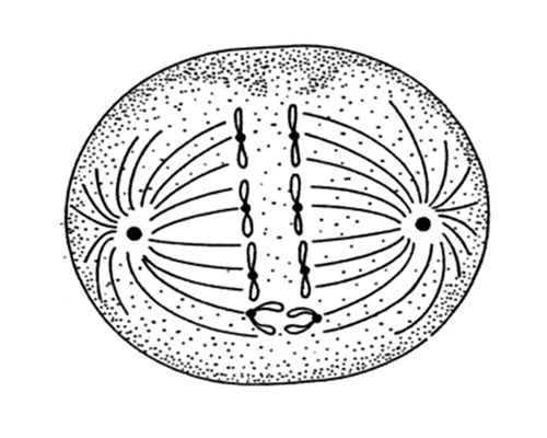 What is Abnormal Cell Division?