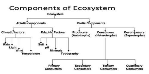 Components of Ecology