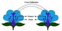 Significance of Cross-pollination