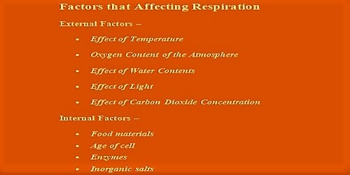 Factors Affecting Respiration