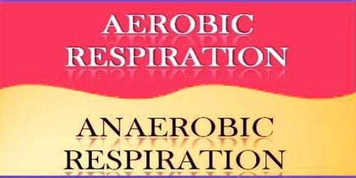 Importance of Aerobic Respiration and Anaerobic Respiration
