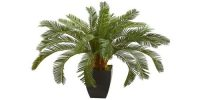 Why is Cycas Called a Living Fossil?