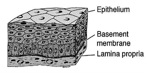 Explain on Compound Epithelium Tissue