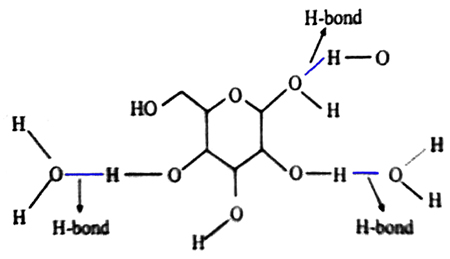 How the molecules of water and molecules of carbohydrate are connected with each other?