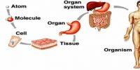 Formation of Tissues and Organs