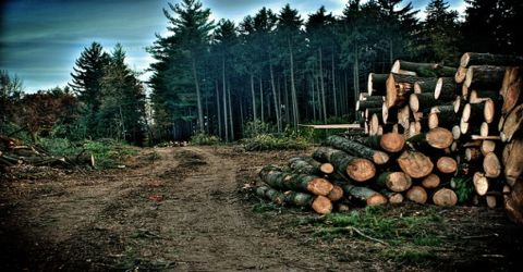 Deforestation: Causes and Effects