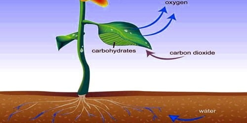Importance of Transpiration in Plants