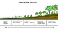 Define Plant Succession? Describe the steps of Plant Succession