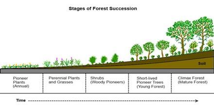 Define Plant Succession? Describe the steps of Plant Succession