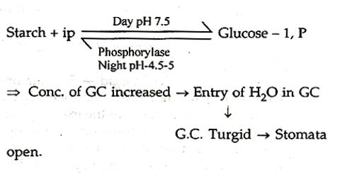 Sayre's theory in terms of Turgidity and Flaccidity of Guard Cells