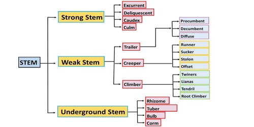 Classifications of Stem