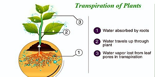 Describe Transpiration of Plants with Types