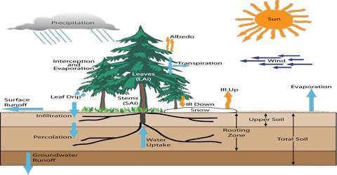 Descriptions about the Factors of Transpiration