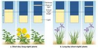 Types of Plants according to the Length of Day Light