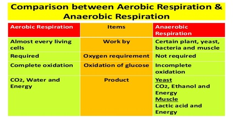 Aerobic respiration and Anaerobic respiration: Comparative View