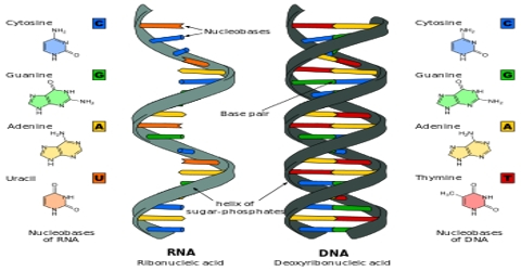 Nucleic Acid: Types and Constituents