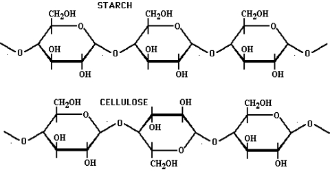 Difference between Starch and Cellulose