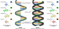 DNA and RNA: a Competitive View