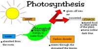Define Photosynthesis with the Equation of this Process with Explanation