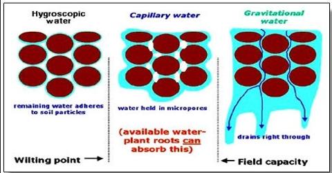 Types of Soil Water