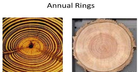 Definition and Formation of Annual Ring