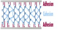 Adhesion and Cohesion: Differences