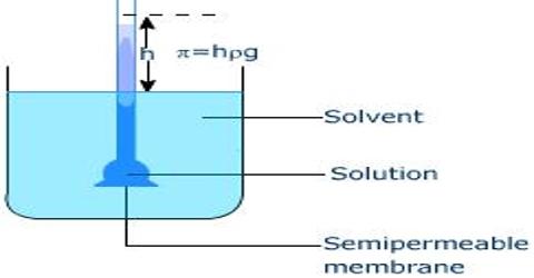 Determination of Osmotic Pressure by Pfeffer's Method