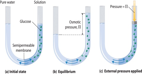 Osmotic Pressure Definition with Explanation