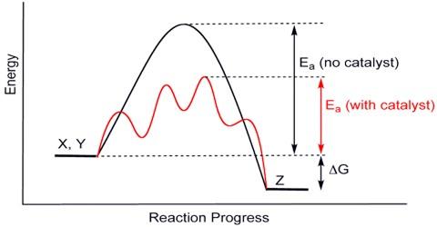 Effect of Catalyst on Equilibrium