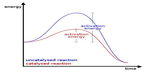 Why a Catalyst cannot Start a Reaction?