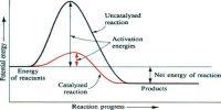 Energy Changes in Catalytic Reactions