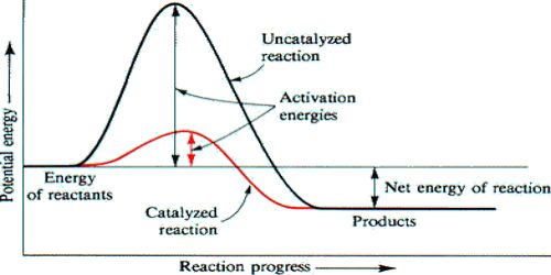 Energy Changes in Catalytic Reactions