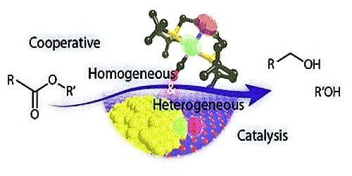 Differences between Homogeneous Catalysis and Heterogeneous Catalysis