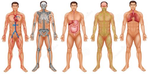 Co-ordination between Organs and Systems to keep the Body Fit