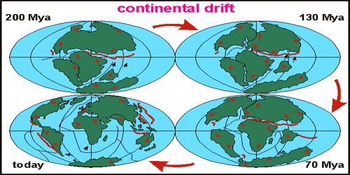 Evidence in Support of the Continental Drift