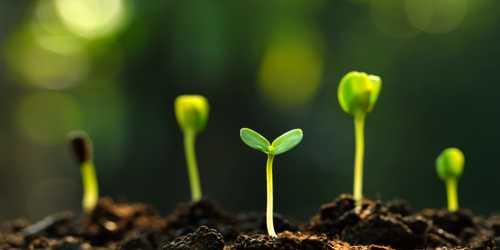 Biological Activity: Soil Forming Factor