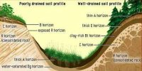 Climate: Soil Forming Factor