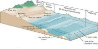 Low Sedimentary Coasts: Erosional Landforms