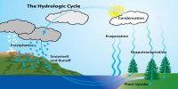 Hydrological Cycle of Water