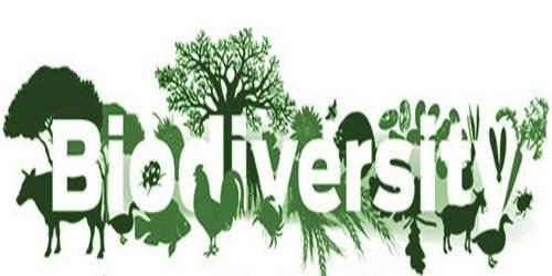 Economic Role of Biodiversity