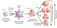 Shape of Colloidal Particles