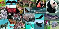 Species Diversity