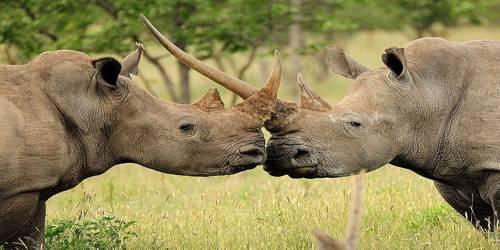 Vulnerable Species of Biodiversity