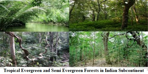 Tropical Evergreen and Semi Evergreen Forests in Indian Subcontinent