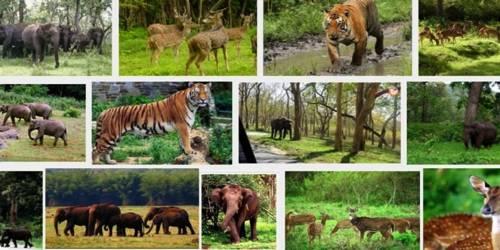Wildlife Conservation in India