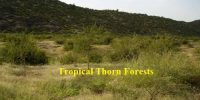Tropical Thorn Forests in Indian Subcontinent