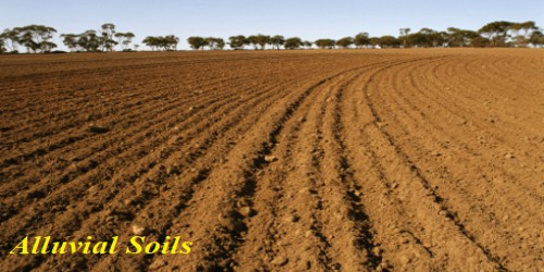 Alluvial Soils in Indian Subcontinent