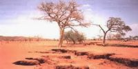 Arid Soils in Indian Subcontinent