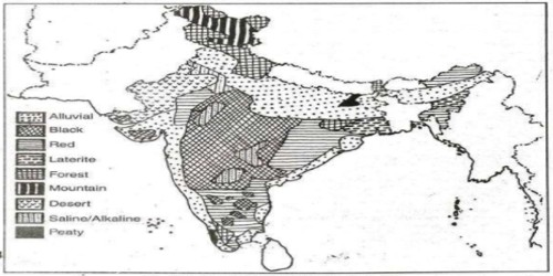 Forest Soils in Indian Subcontinent