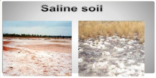 Saline Soils in Indian Subcontinent